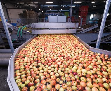 Линии за сортиране на плодове