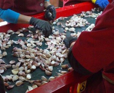 Машини за производство на чесън и арпаджик