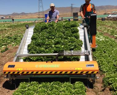 Машини за производство на листни зеленчуци