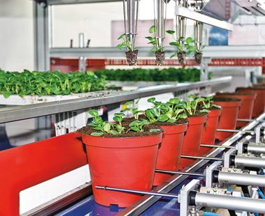 Оборудване за производство на разсад Urbinati