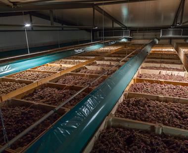 Системи за съхранение на картофи, лук и моркови Tolsma